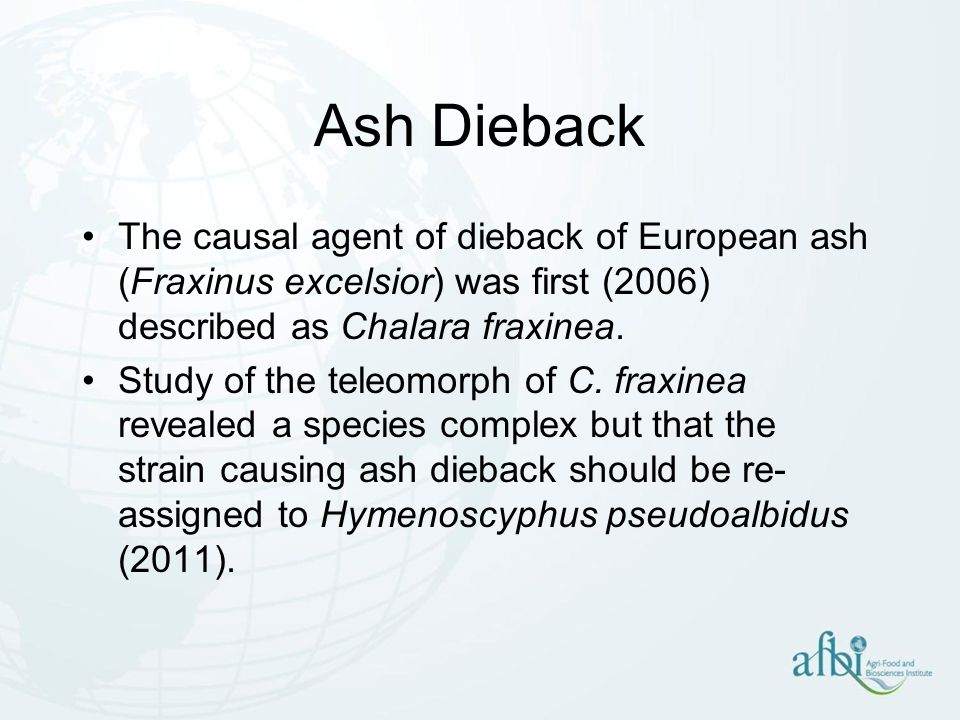 Ash Dieback The causal agent of dieback of European ash (Fraxinus excelsior) was first (2006) described as Chalara fraxinea.