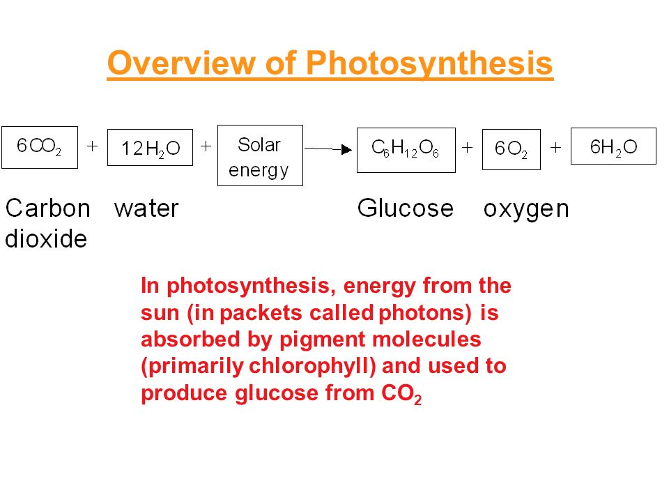overview of photosynthesis The sun is the ultimate source of energy for virtually all organisms photosynthetic  cells are able to use solar energy to synthesize energy-rich food molecules.