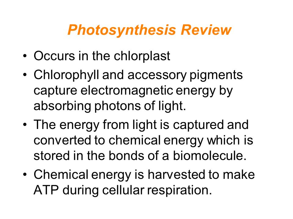 ap biology essays on cellular respiration Short, helpful video on the topic of photosynthesis vs respiration by top ap us biology teacher, patrick videos are produced by leading online education provider.