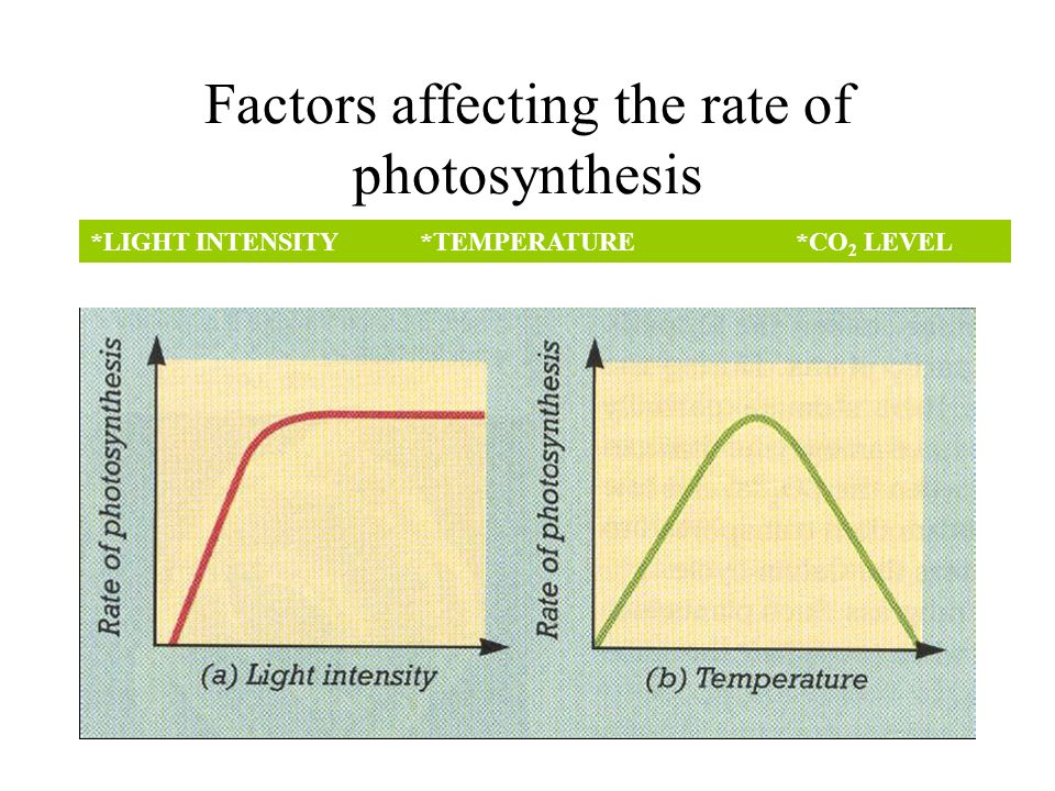 15 Main Factors Affecting Photosynthesis