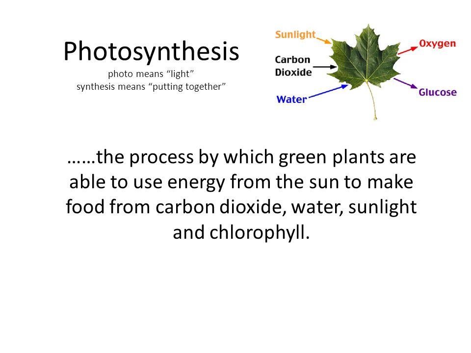 Parts Of A Plant Plant Vocabulary Ppt Video Online