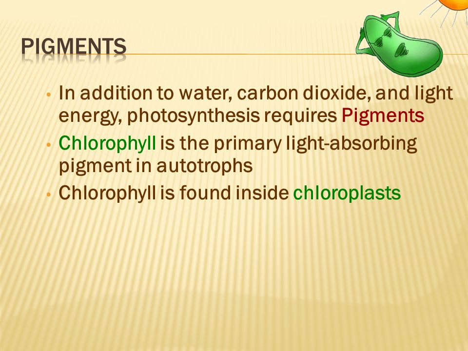 pigments In addition to water, carbon dioxide, and light energy, photosynthesis requires Pigments.