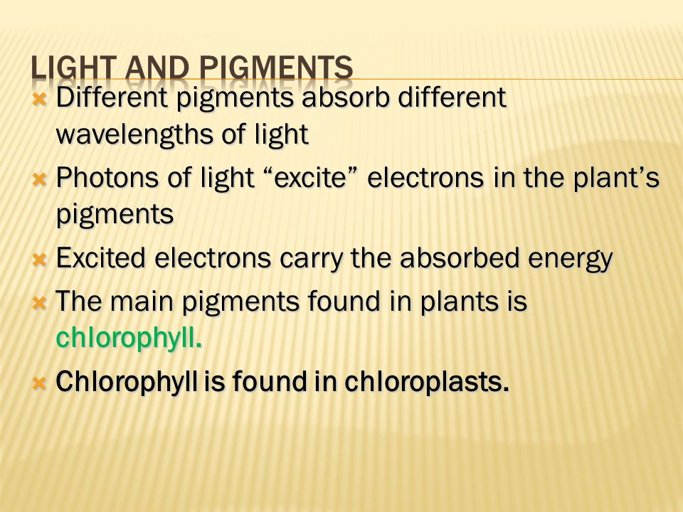 Light and Pigments Different pigments absorb different wavelengths of light. Photons of light excite electrons in the plant's pigments.