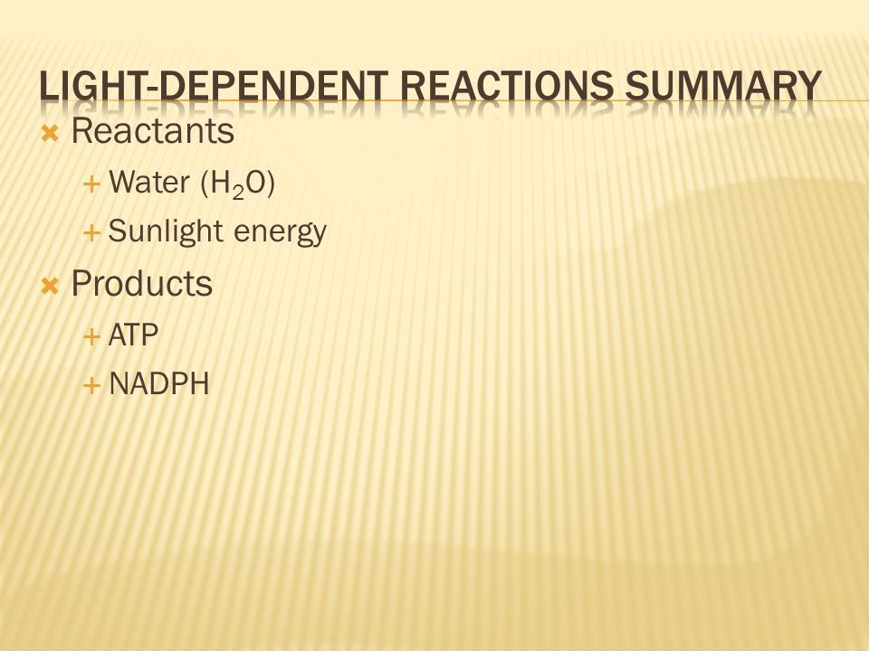 Light-dependent reactions summary