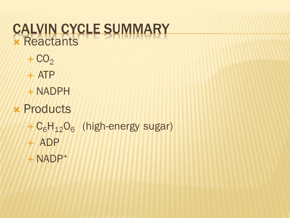 Calvin cycle summary Reactants Products CO2 ATP NADPH