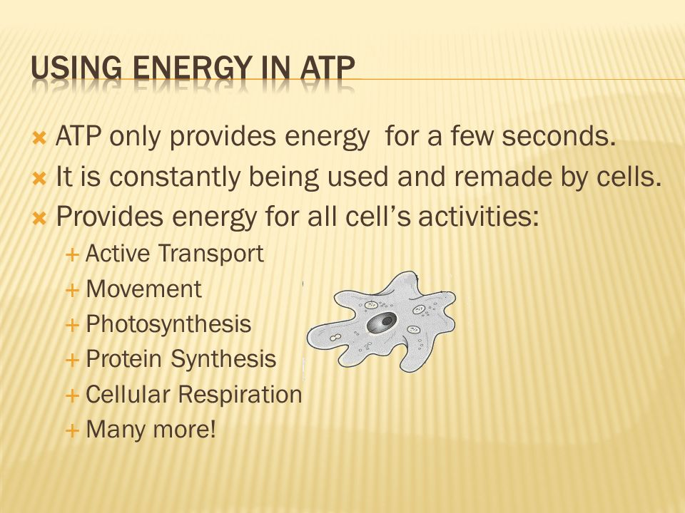 Using energy in atp ATP only provides energy for a few seconds.
