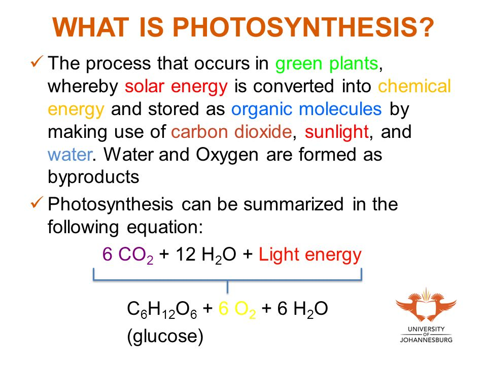 Unit 6 Photosynthesis Process Of Food Production By