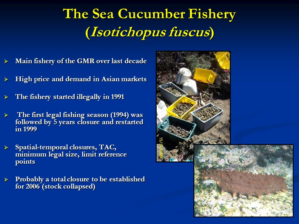 The Sea Cucumber Fishery (Isotichopus fuscus)