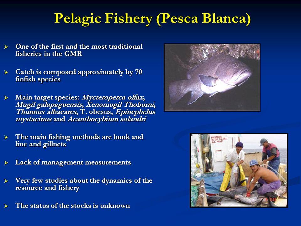 Pelagic Fishery (Pesca Blanca)