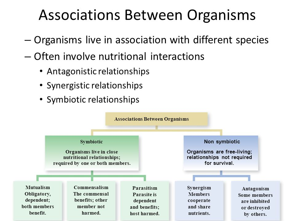 types of antagonistic relationship biology