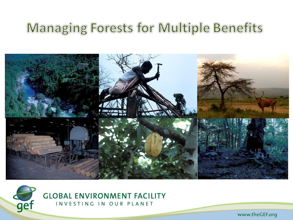 Managing Forests for Multiple Benefits