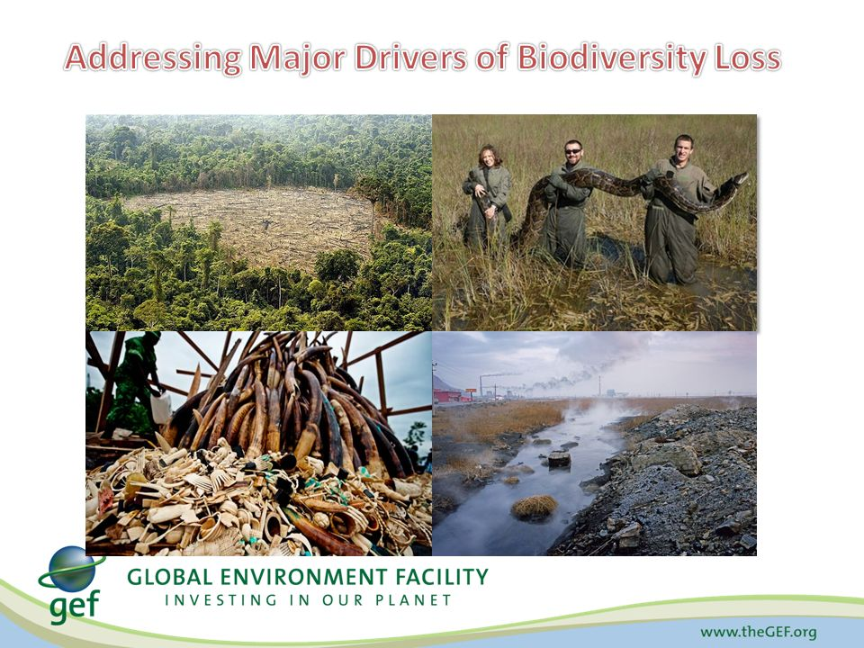 Addressing Major Drivers of Biodiversity Loss