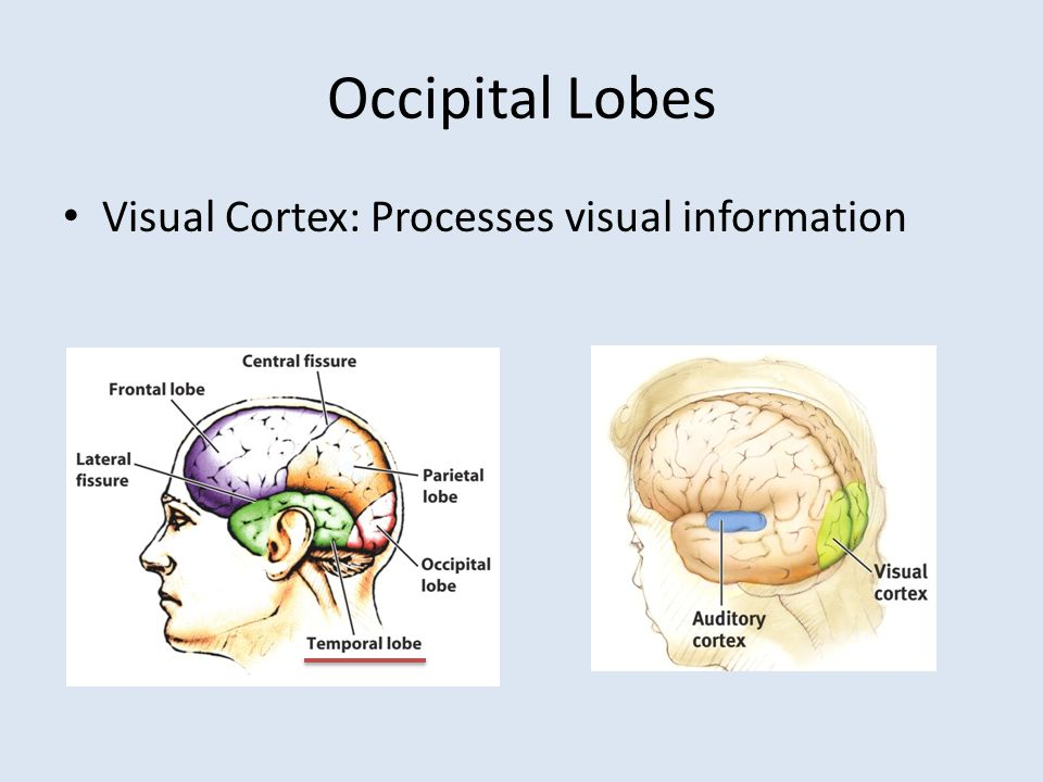 Major Brain Structures And Functions Ppt Video Online