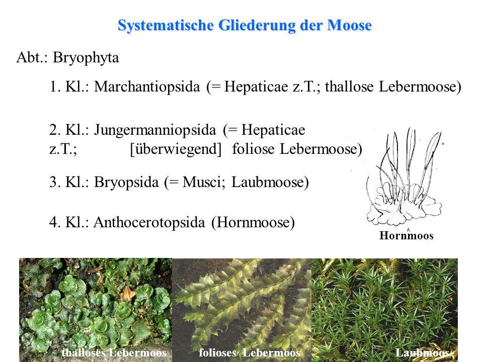 Systematische Gliederung der Moose