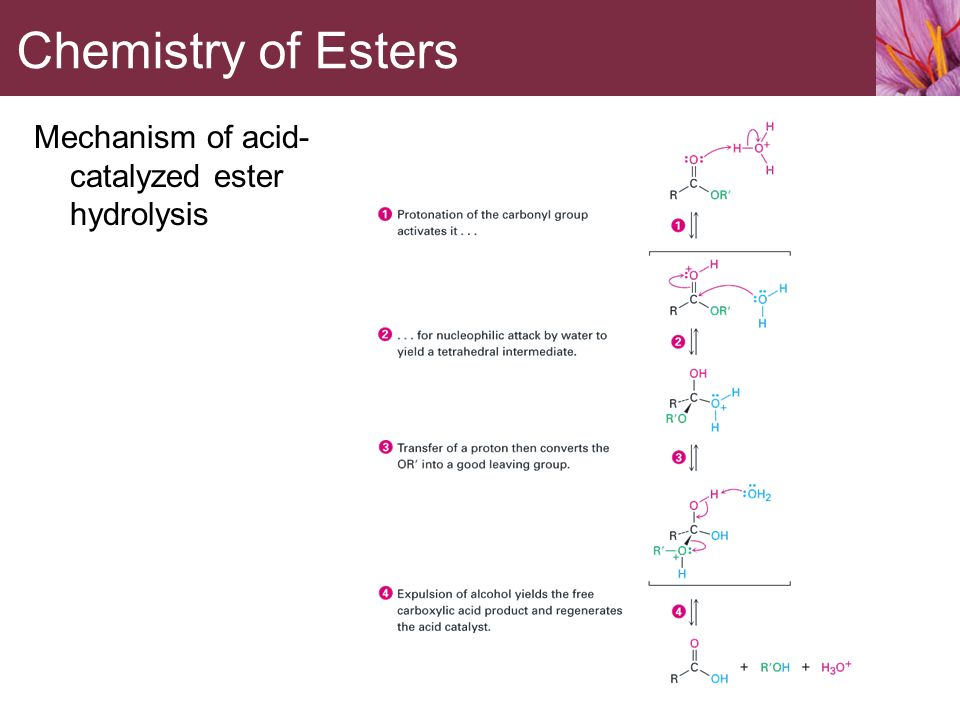 hydrolysis of esters acid mechanism Esters and amides acid–base-catalysed hydrolyses are very common one example is the hydrolysis of amides or esters their hydrolysis  mechanism for acid .