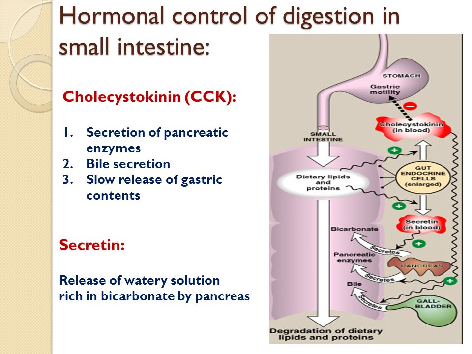 Biochemical Aspects Of Digestion Of Lipids Ppt Video