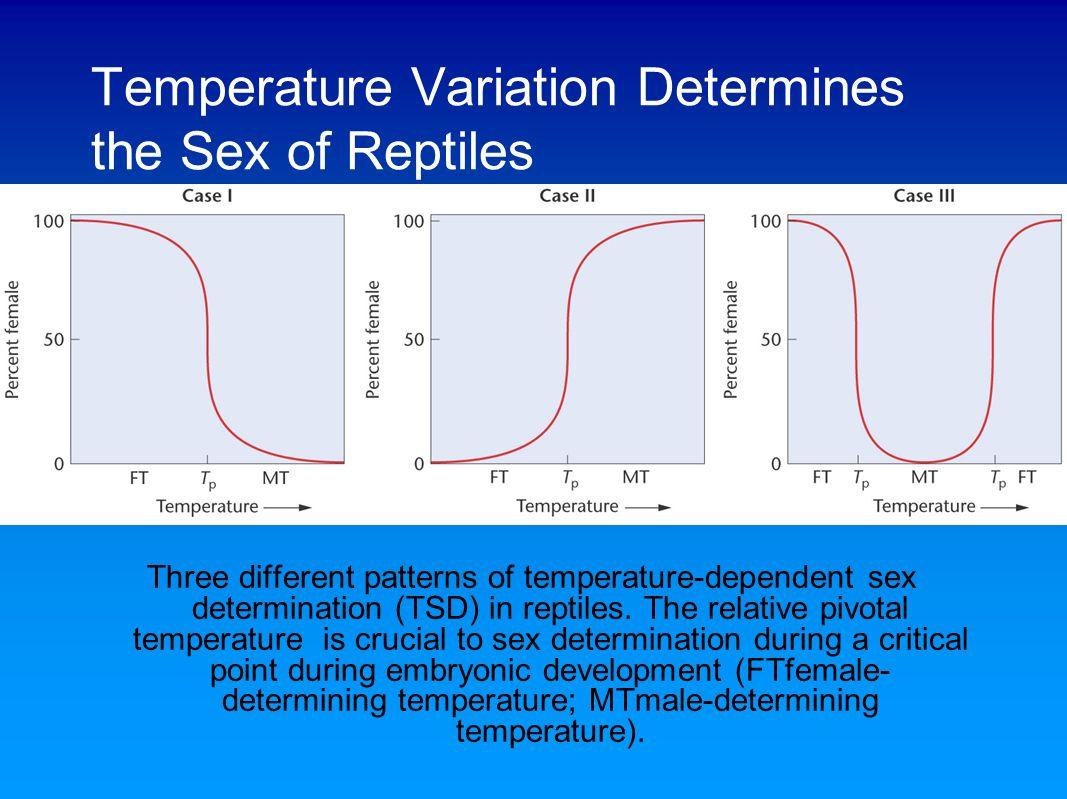 Temperature Sex 24