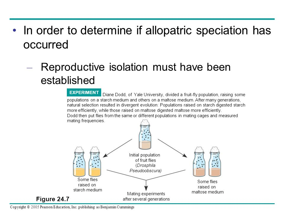 Chapter 24 Speciation The Origin Of Species Ppt Video Online Download