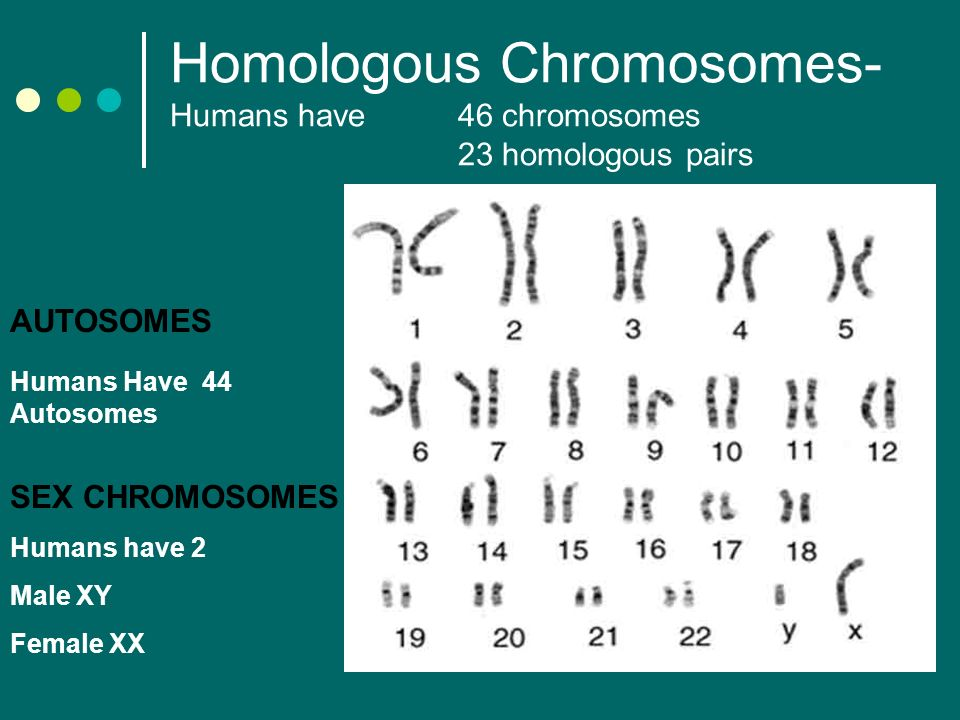 an analysis of sex chromosomes and sex determination in mammals The surprising evolution of sex determination a detailed analysis of sex chromosomes finds unexpected evolution of functional y.