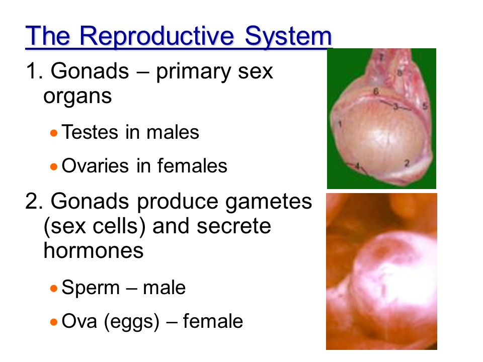 Hormone Testing: When to Use Serum, Saliva, and Urine