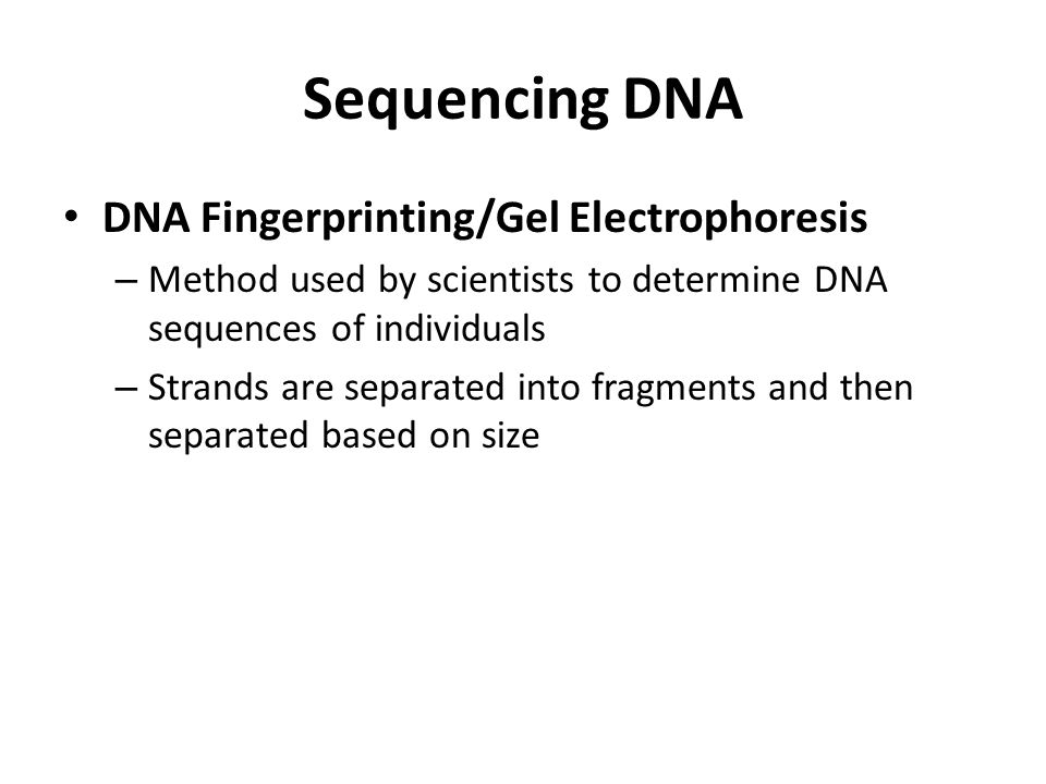 Sequencing DNA DNA Fingerprinting/Gel Electrophoresis