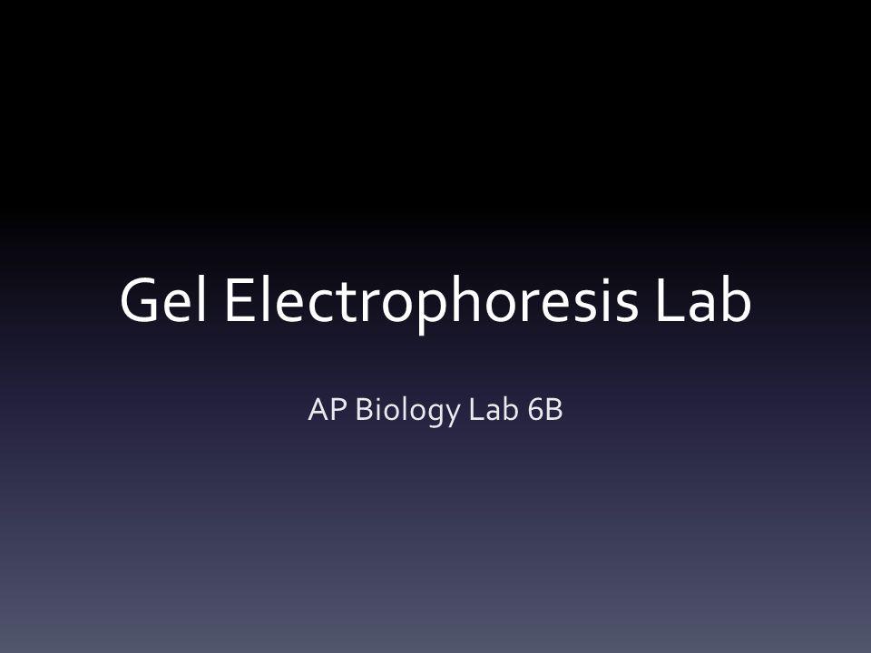gel electrophoresis lab write up