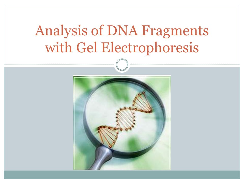Analysis Of Dna 103