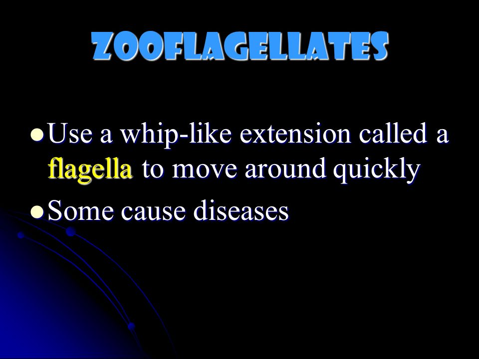 Zooflagellates Use a whip-like extension called a flagella to move around quickly.