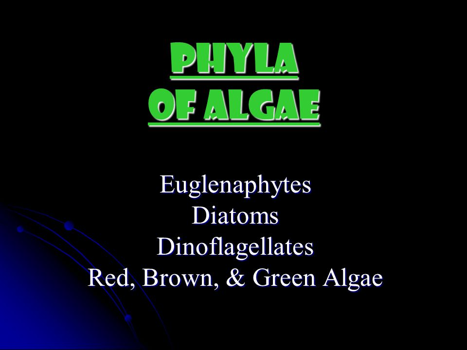 Euglenaphytes Diatoms Dinoflagellates Red, Brown, & Green Algae