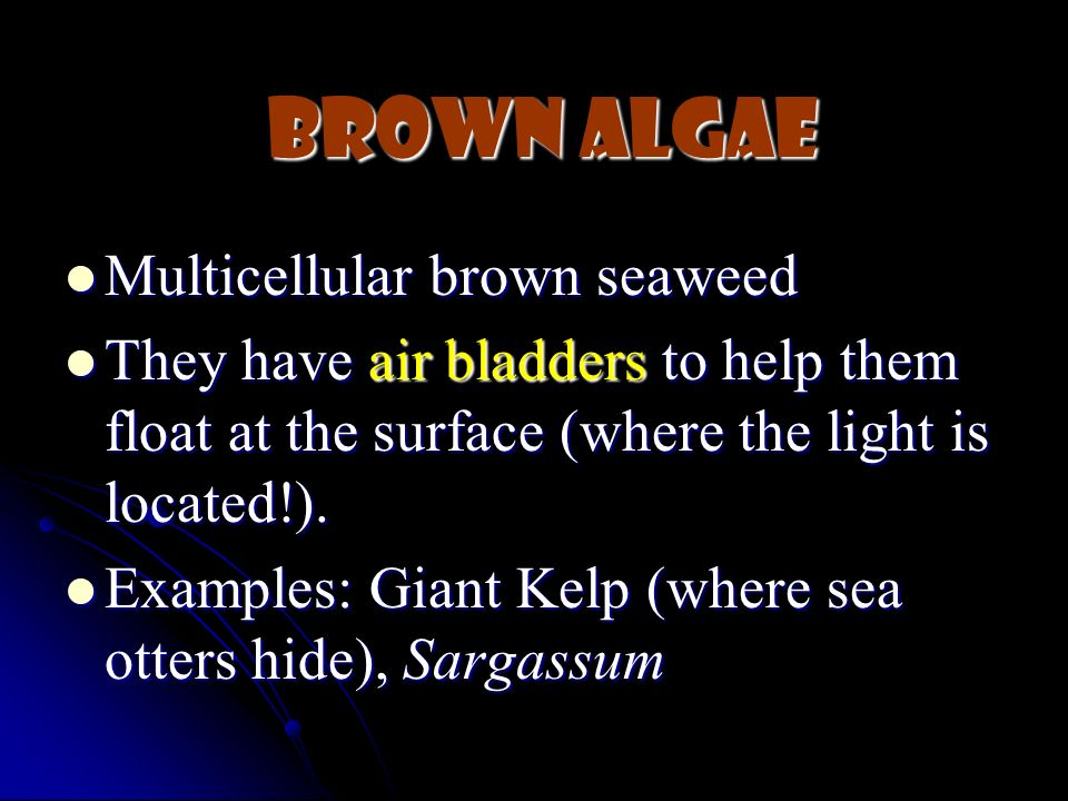 Brown Algae Multicellular brown seaweed