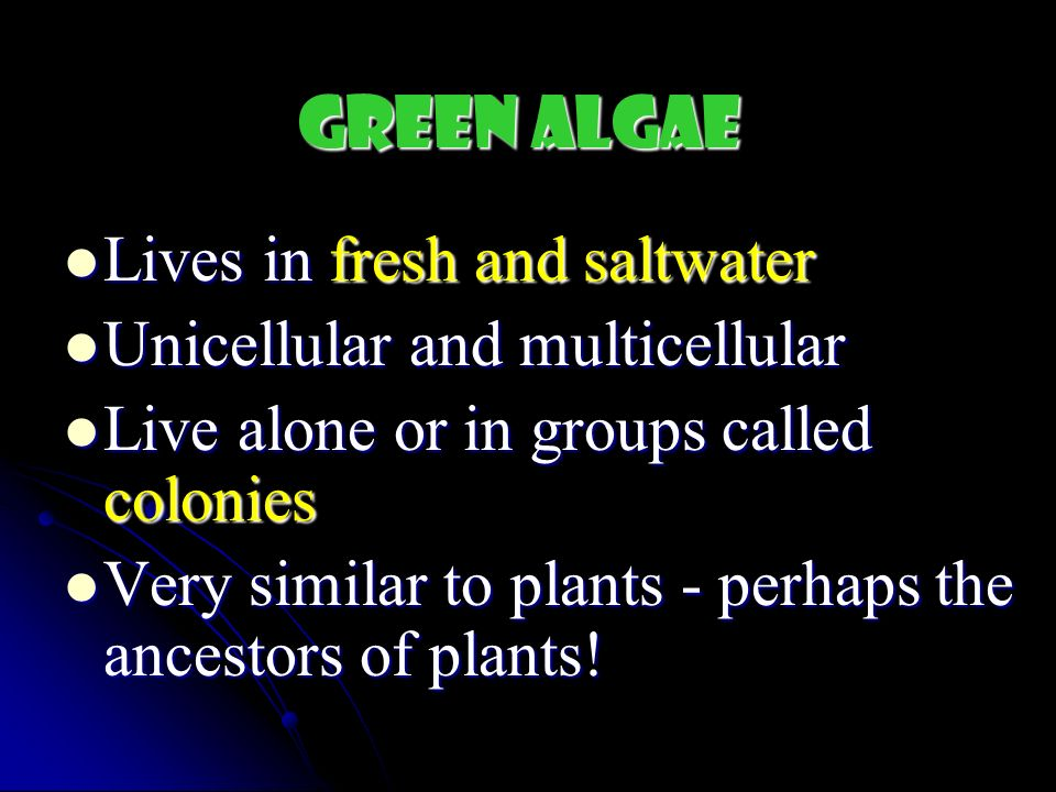 Green Algae Lives in fresh and saltwater Unicellular and multicellular