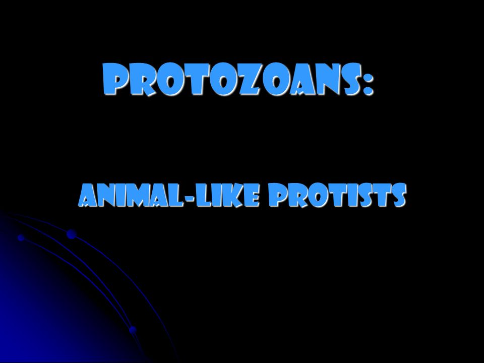 Protozoans: Animal-like Protists