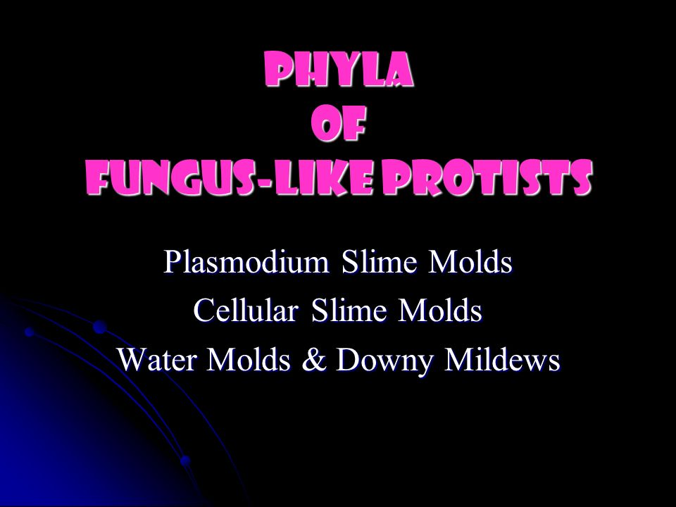 Phyla of Fungus-like Protists