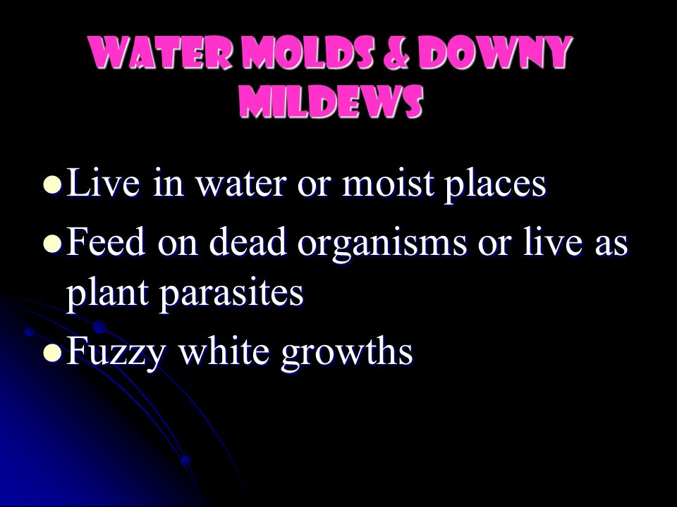 Water Molds & Downy Mildews