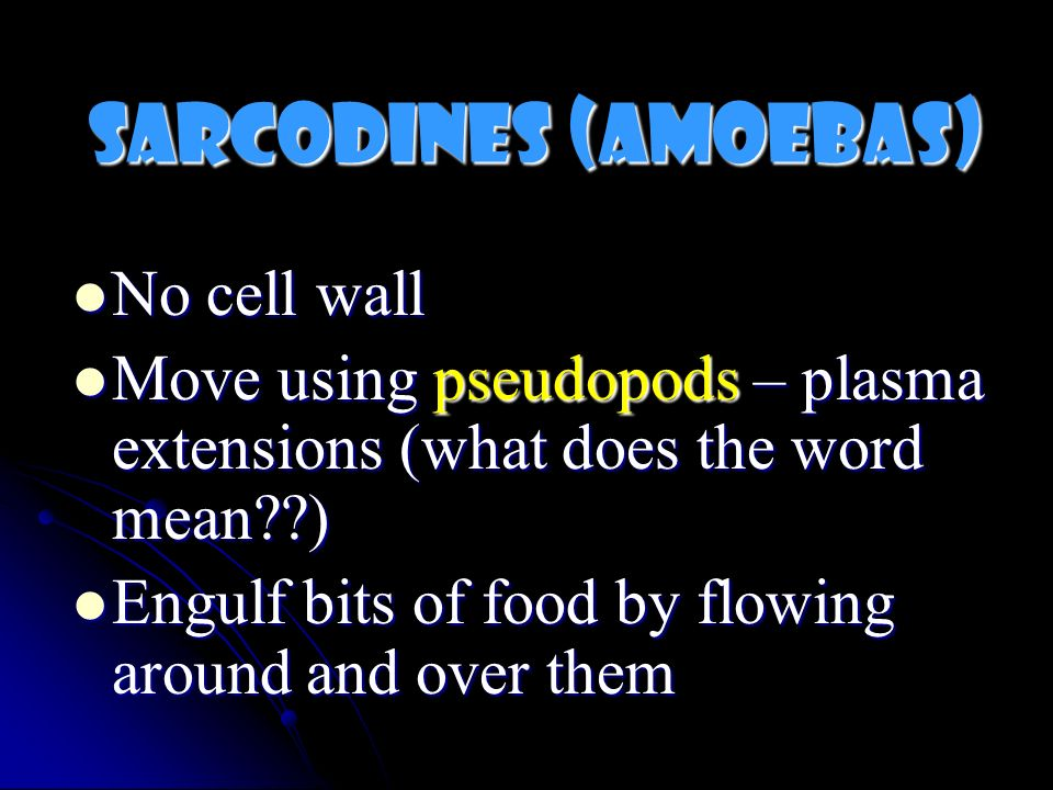 Sarcodines (Amoebas) No cell wall