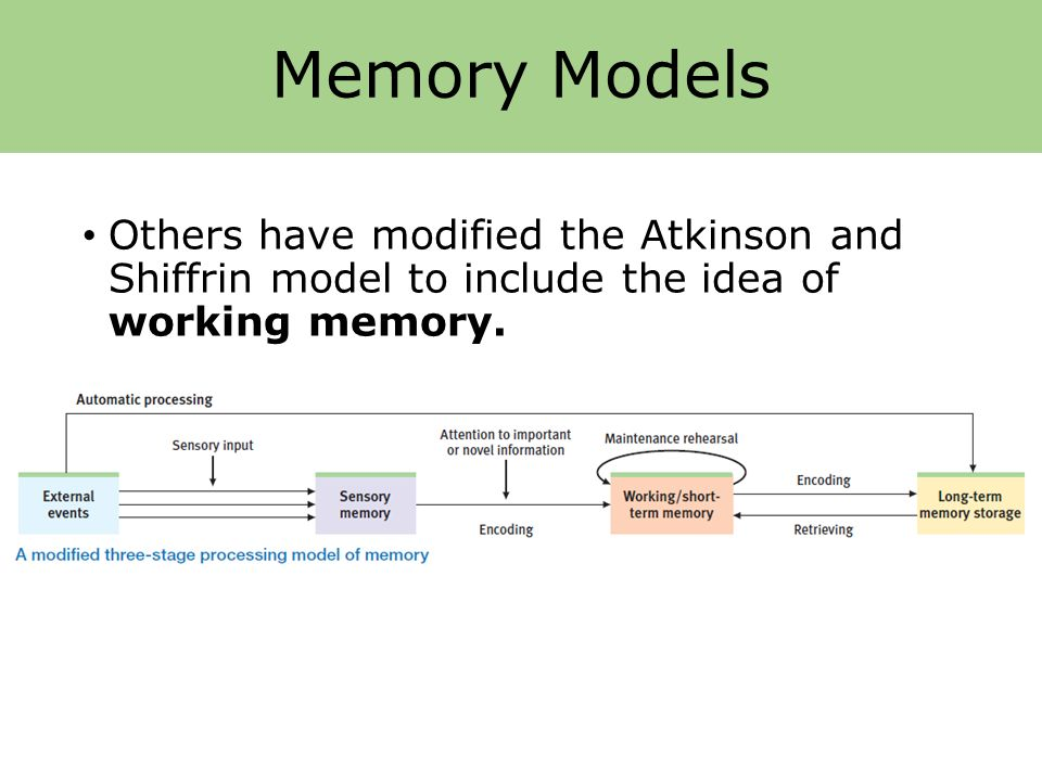 atkinson shiffrin memory model Where did the working memory model come from and how did it get started baddeley describes in detail how he and graham hitch published the original model in the context of many existing, early cognitive models of short term memory and the widely popular atkinson and shiffrin model tags: working memory.