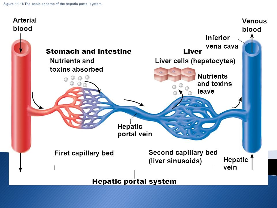 Hepatic Portal System Tenderness