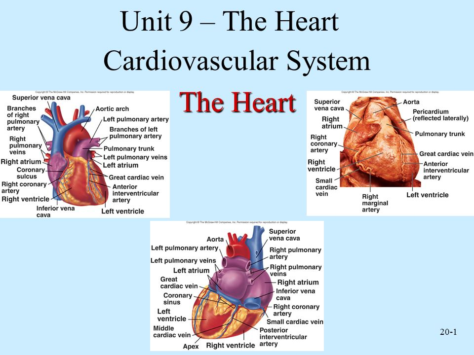cardiovascular system Cardiovascular: relating to the circulatory system, which comprises the heart and blood vessels and carries nutrients and oxygen to the tissues of the body and removes carbon dioxide and other wastes from them.