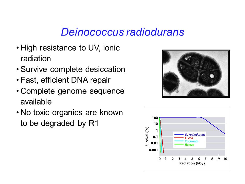 bioremediation of radioactive waste from the sea using deinococcus radiodurans The sequencing of d radiodurans has facilitated the continued development of this organism as an agent for use in bioremediation of radioactive waste (), and with a very efficient genetic manipulation system, the organism is poised for rapid development to become an effective bioremediation agent although the genome sequence did not give.