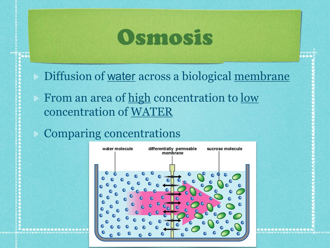 Osmosis Diffusion of water across a biological membrane