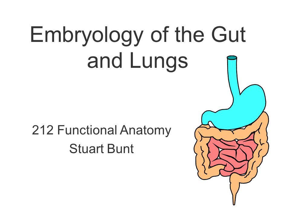 Embryology of the Gut and Lungs - ppt video online download