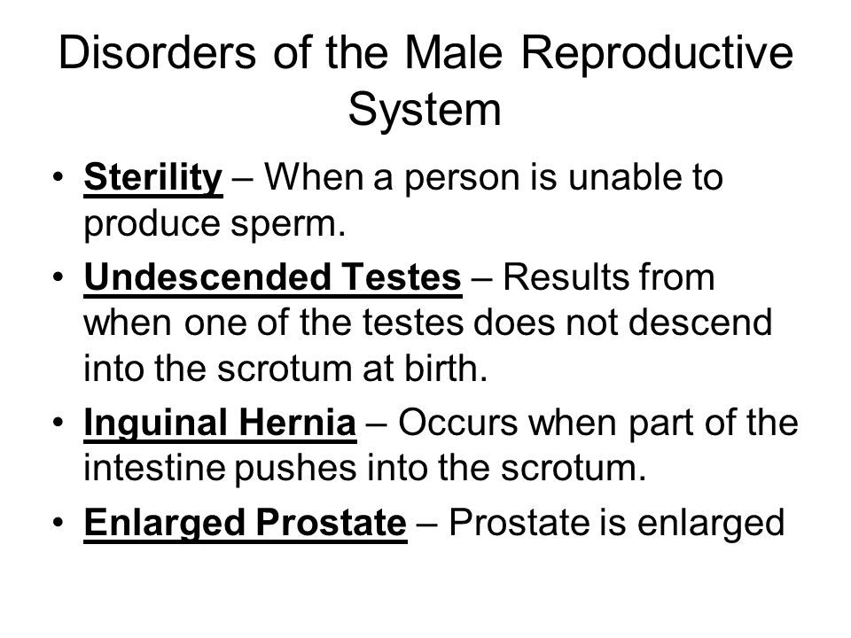 the male reproductive system - ppt video online download, Muscles