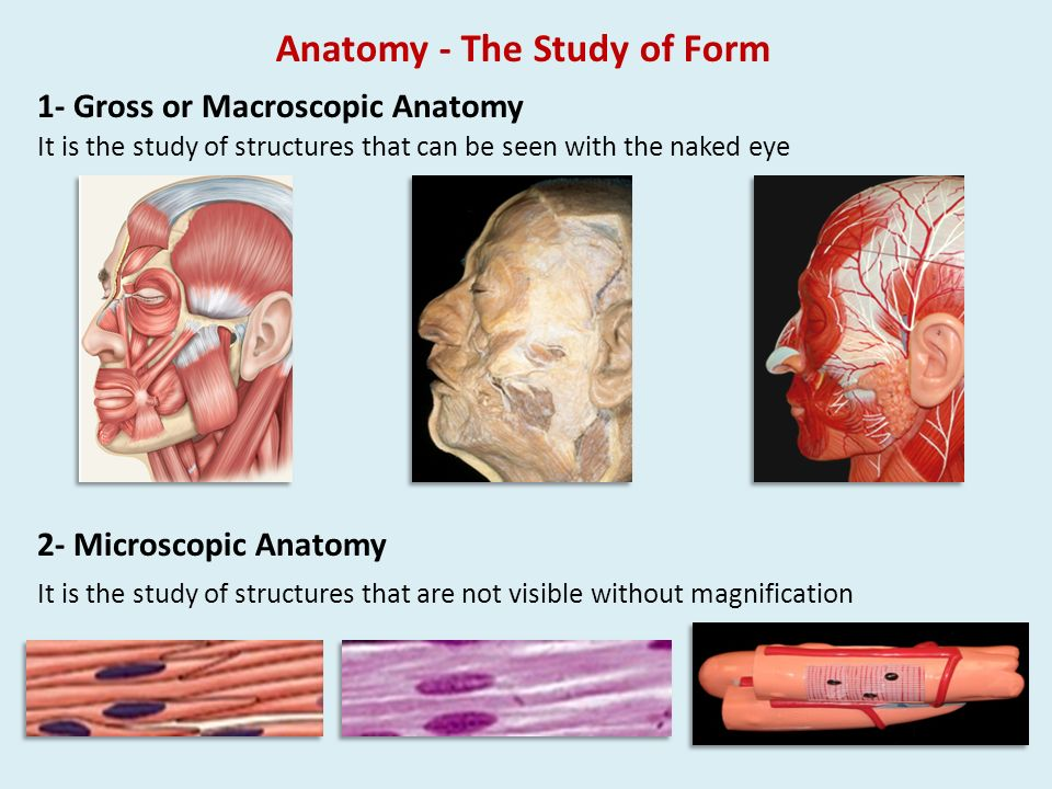 What Is Macroscopic Anatomy Image collections - human body anatomy