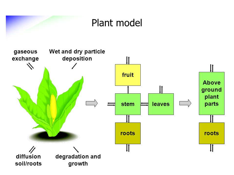 Plant model degradation and growth diffusion soil/roots