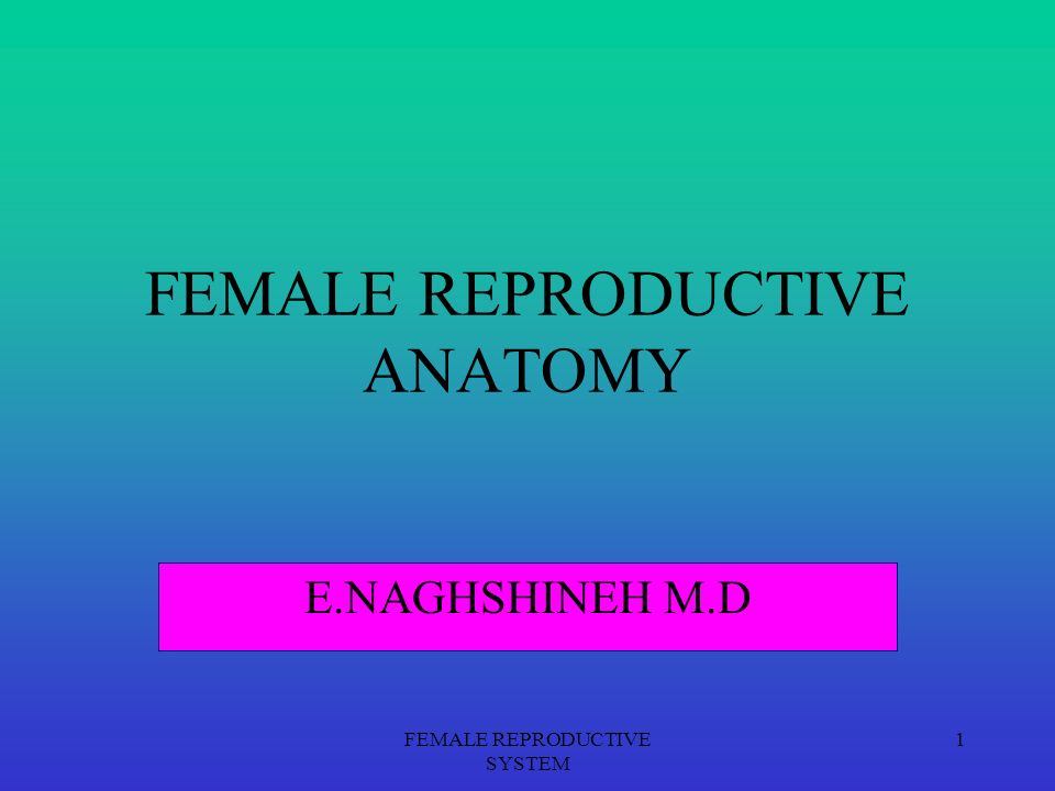 Female reproductive anatomy video