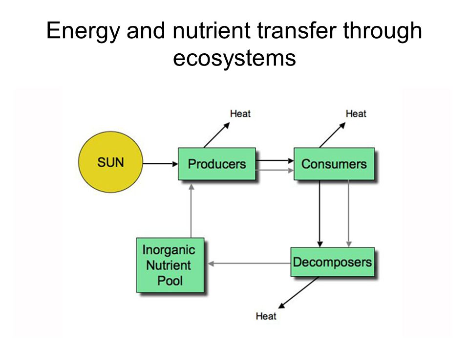 Energy And Nutrient Transfer Through Ecosystems on Food Chain Energy Flow Through