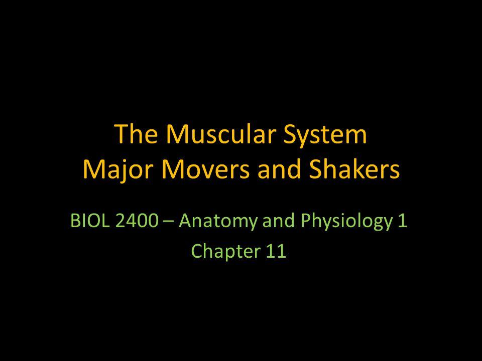 The Muscular System Major Movers and Shakers - ppt video online download