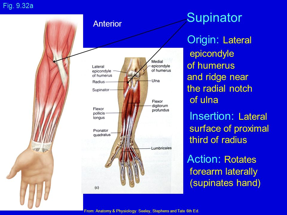 Anatomy and Physiology I - ppt download