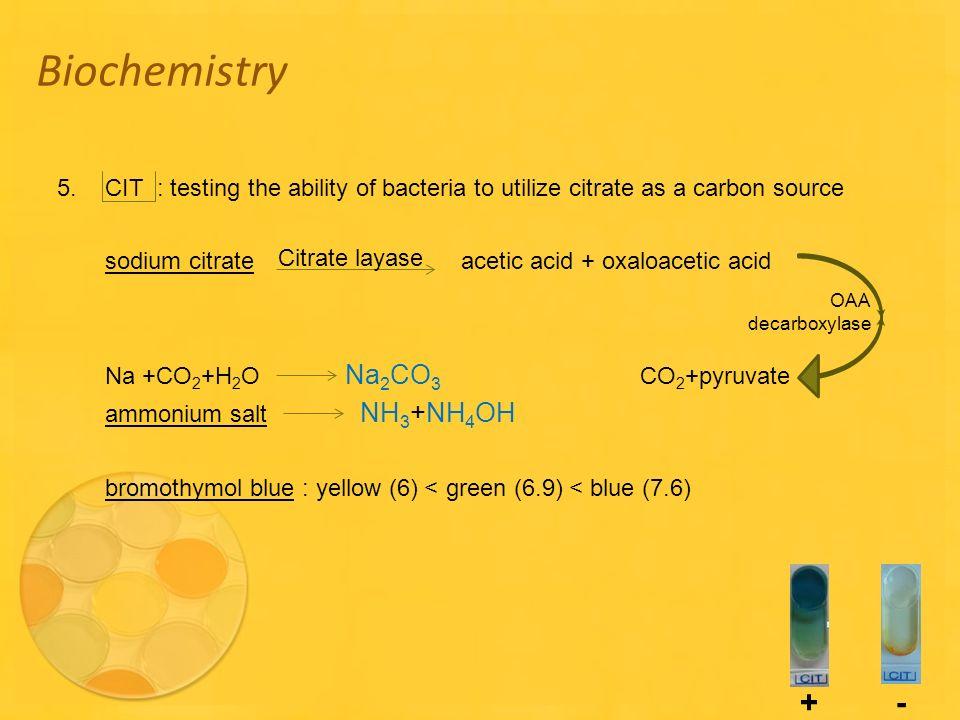 Oxaloacetic Acid Decarboxylation Api 20E. - ppt ...