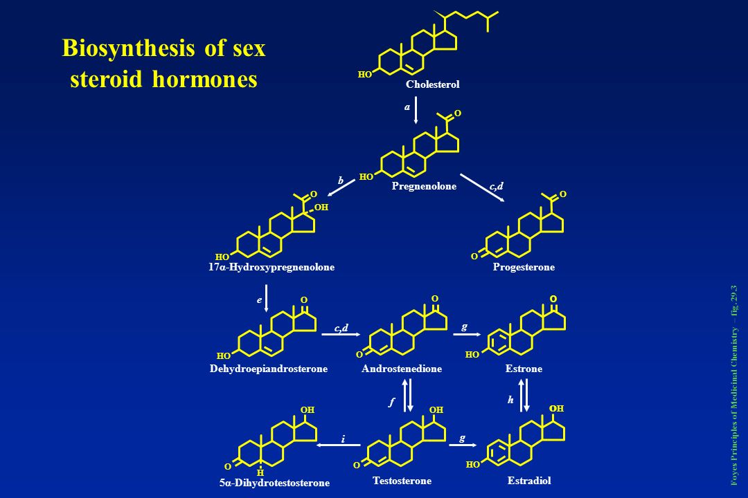 Biosynthesis of sex steroid hormones